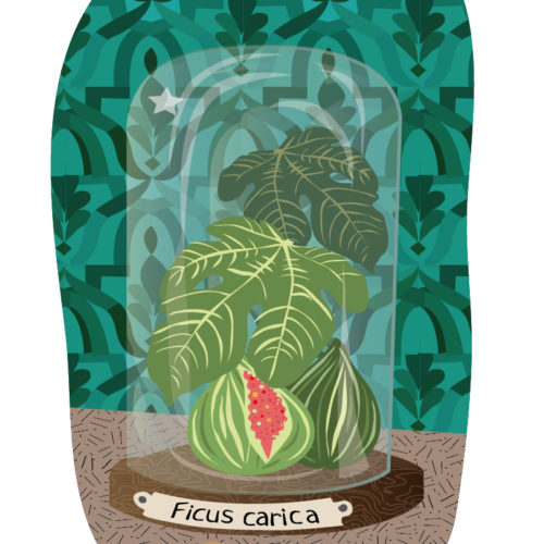 Fig On Display | Stefania Tomasich